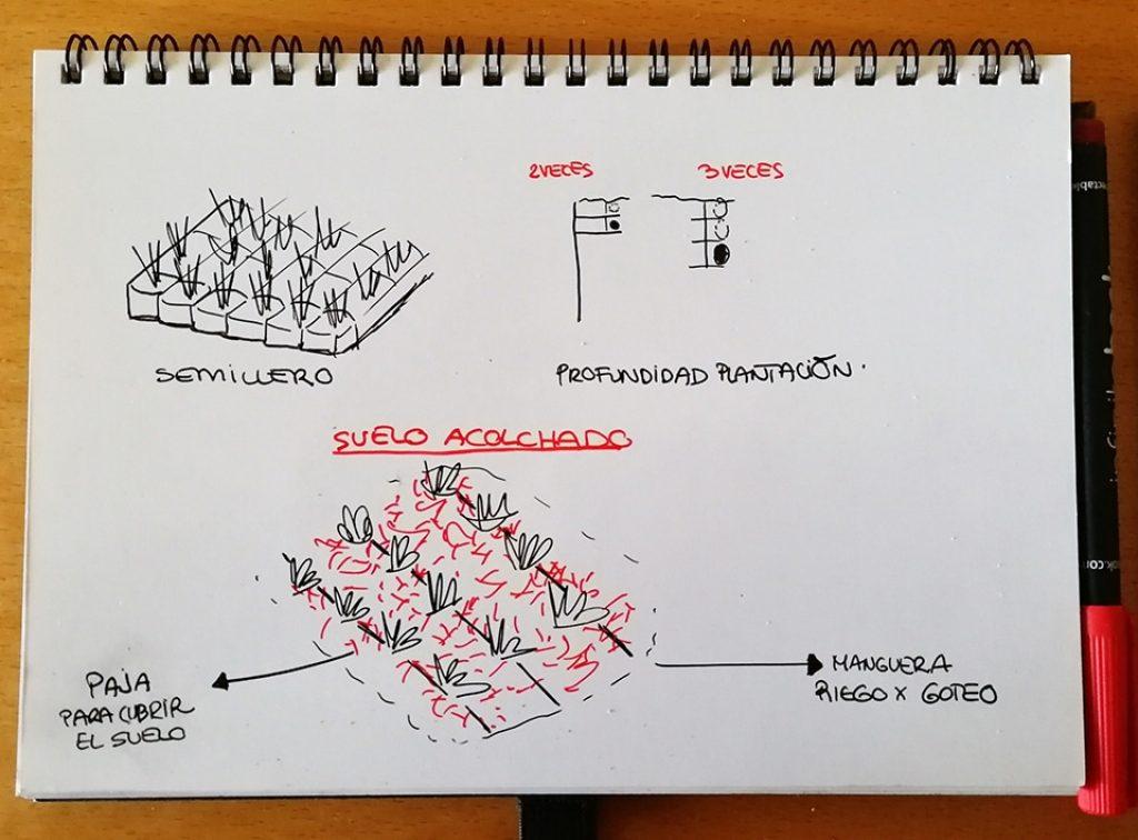 Dibujo donde se muestra técnica del acolchado del suelo para plantar hortalizas