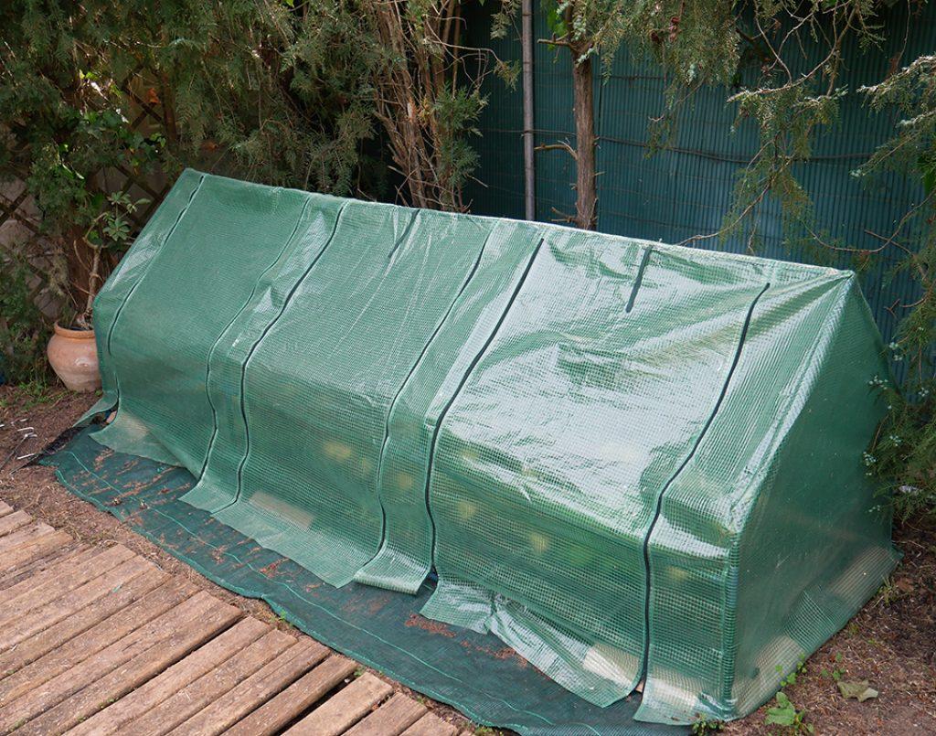Invernadero de plástico para cultivar y sembrar hortalizas y pimientos